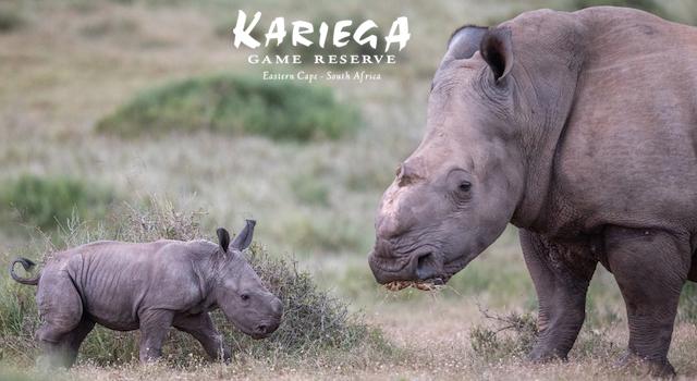 Hugely Discounted Specials at Kariega Game Reserve