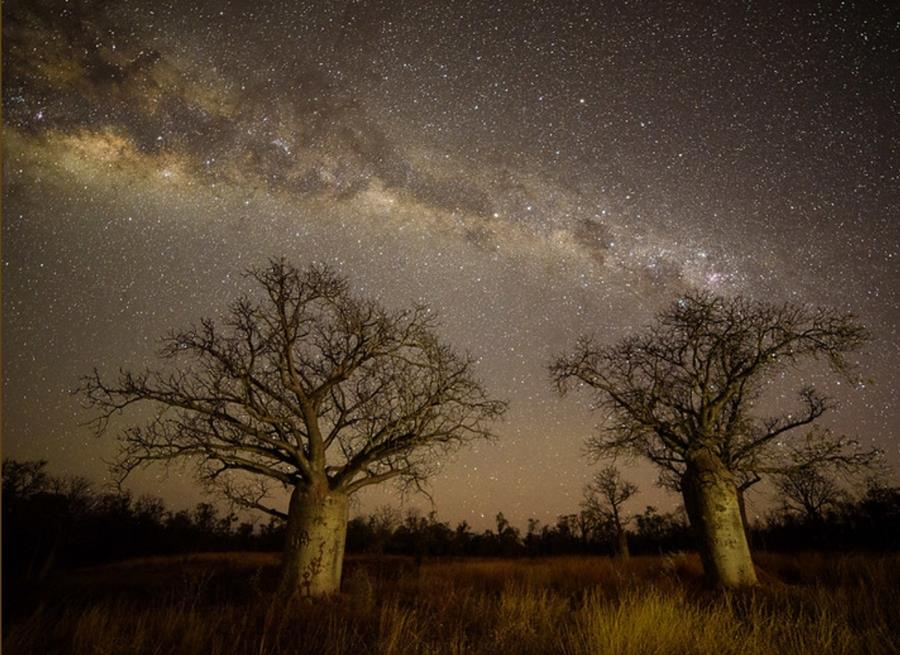 Night Sky Rodney Campbell
