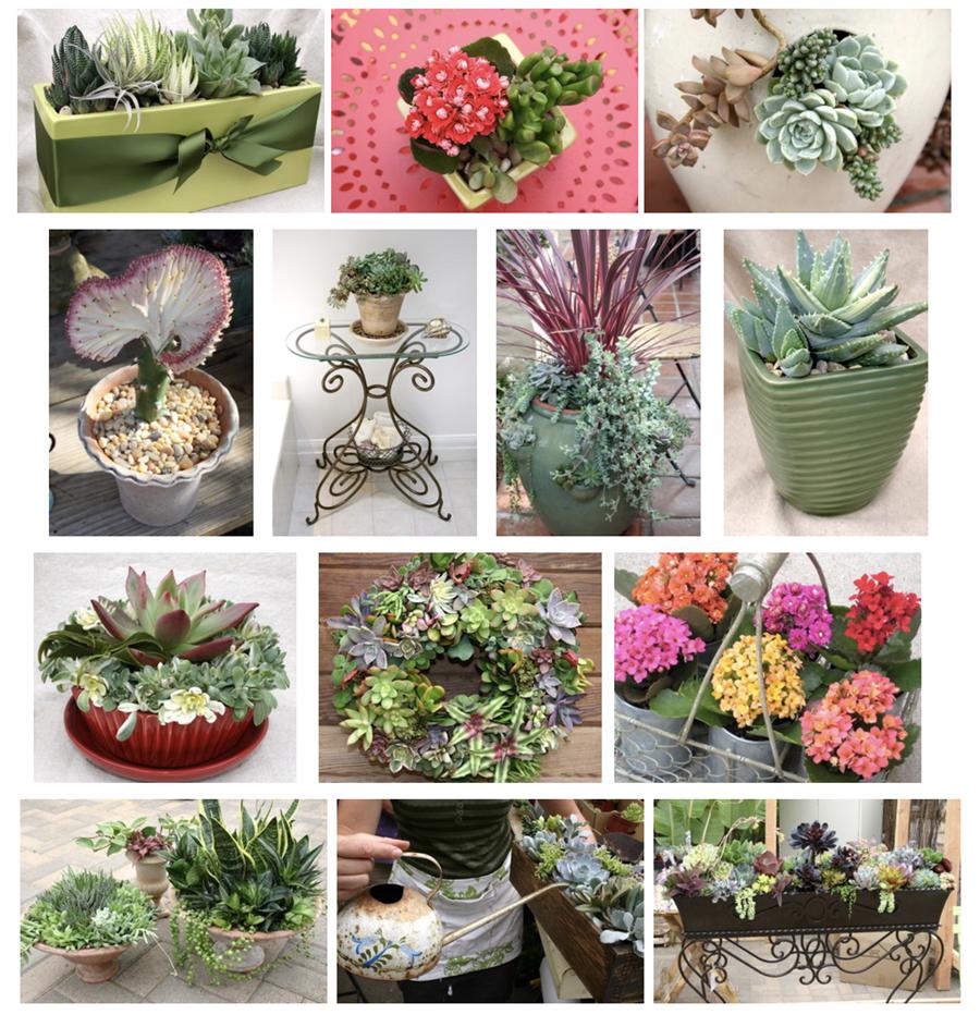 Melissa Teisl designs in Succulent Container Gardens