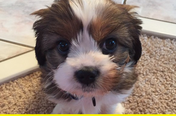 Floofy puppy.