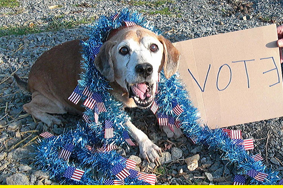 Voting dog!