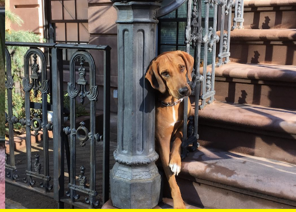 Dog fence.