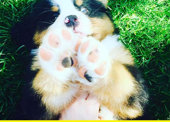 Puppy paws.