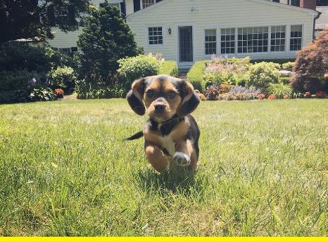Running pup.