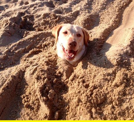 Sandy dog.