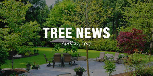 Tree News - April 27, 2017
